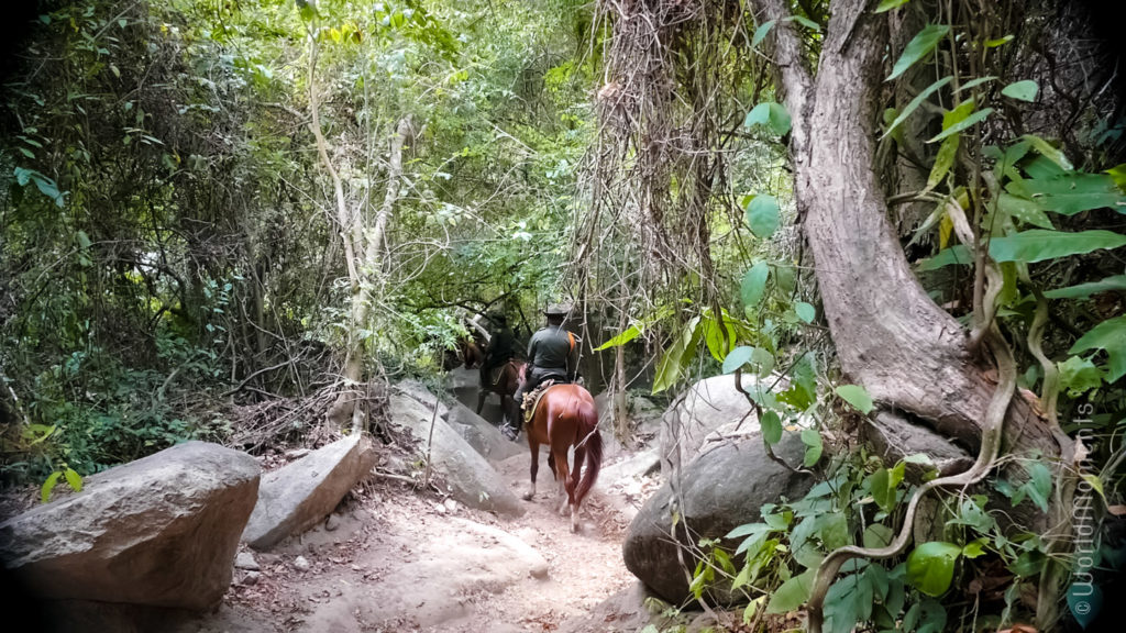 Santa Marta, Parque Tayrona, path with horses